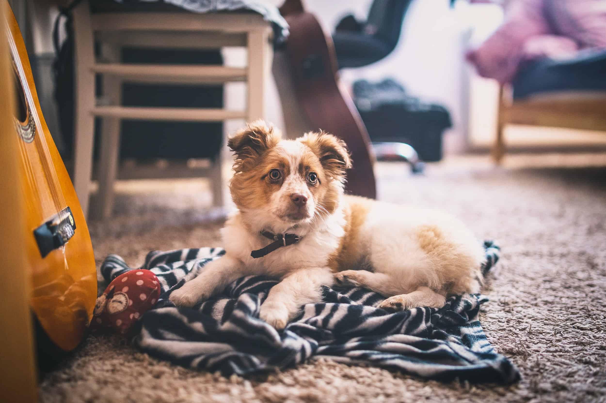 dog on a blanket on the floor