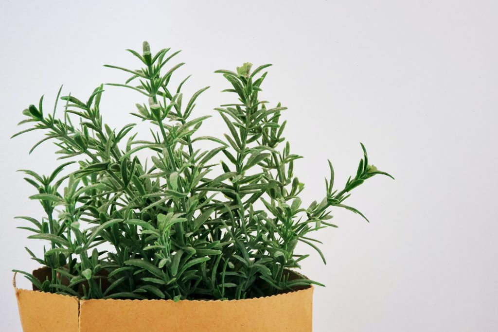 Fresh rosemary in a small bag