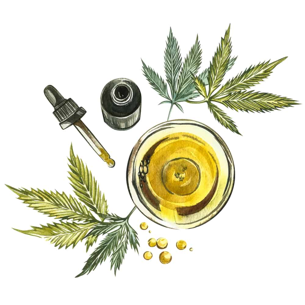 CBD oil hemp products. Watercolor illustration on white background. Good for cosmetics, medicine, treating, aromatherapy, nursing, package design. Set of drawing floral elements, watercolor botanical illustration.