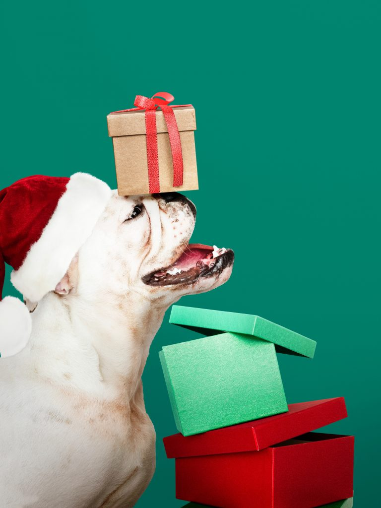 Approximately 44% of all households in the United States have a dog, and with the holiday season in full swing, it's the perfect time to give your pet a gift that just keeps giving -- i.e., one of these top-rated pet item subscription boxes. Check out some of the most popular companies in the pet care subscription box business: