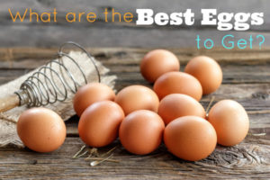 What are the best eggs to buy