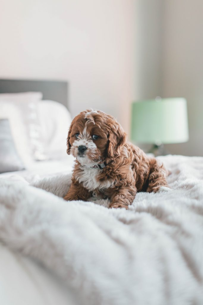 Mattress with no fiberglass with puppy on it